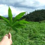 The Most Dangerous Medical Marijuana Myth