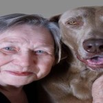 Therapy Dogs Helping Cancer Patients